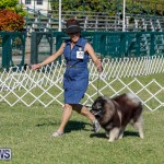 International Dog Show Bermuda, October 21 2017_8251