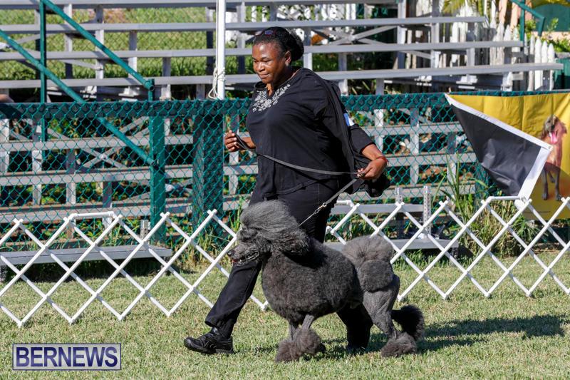 International-Dog-Show-Bermuda-October-21-2017_8269