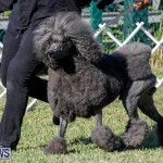 International Dog Show Bermuda, October 21 2017_8270