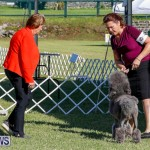 International Dog Show Bermuda, October 21 2017_8302