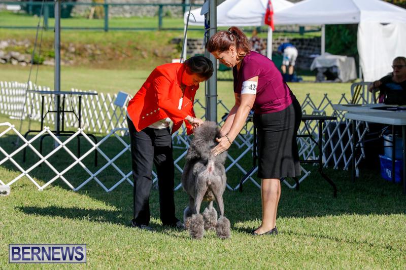 International-Dog-Show-Bermuda-October-21-2017_8305