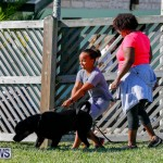 International Dog Show Bermuda, October 21 2017_8316