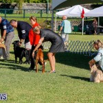 International Dog Show Bermuda, October 21 2017_8321