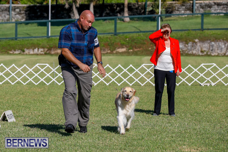 International-Dog-Show-Bermuda-October-21-2017_8324