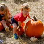 J&J Produce Pumpkin Picking Bermuda, October 14 2017_6035