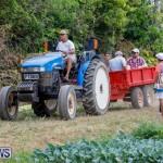 J&J Produce Pumpkin Picking Bermuda, October 14 2017_6047