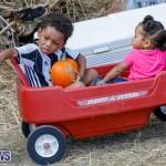 J&J Produce Pumpkin Picking Bermuda, October 14 2017_6060