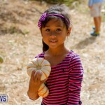J&J Produce Pumpkin Picking Bermuda, October 14 2017_6087