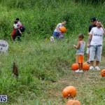 J&J Produce Pumpkin Picking Bermuda, October 14 2017_6124