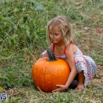 J&J Produce Pumpkin Picking Bermuda, October 14 2017_6125