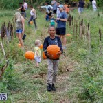 J&J Produce Pumpkin Picking Bermuda, October 14 2017_6147