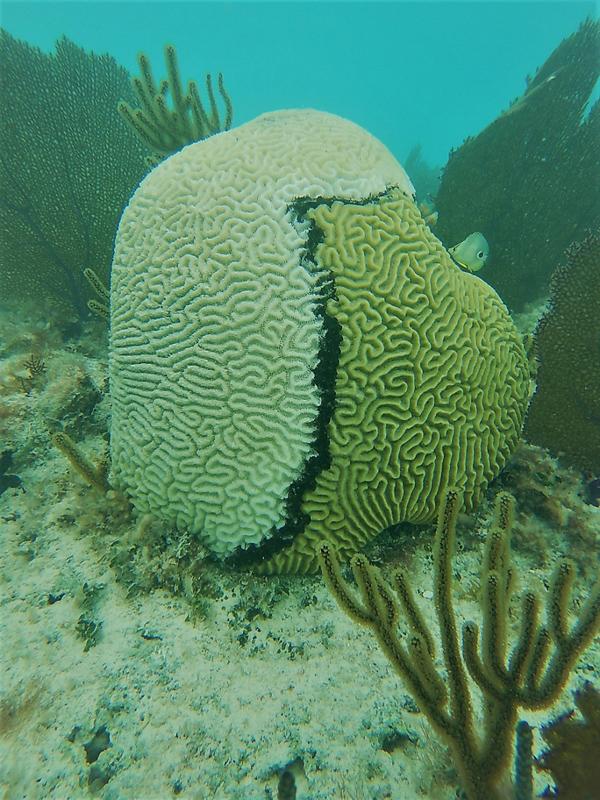 REEF Watch Bermuda Oct 2017 (3)