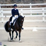Dressage Bermuda Nov 8 2017 (1)