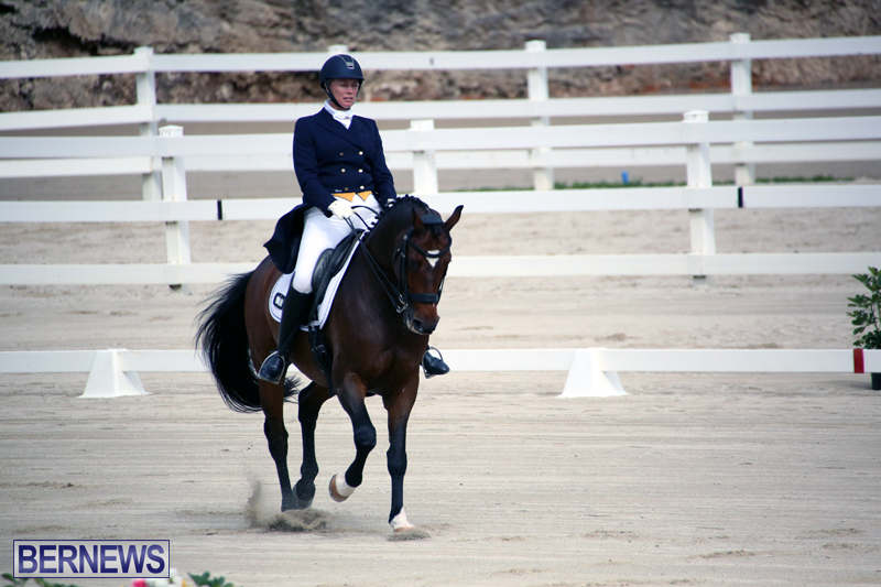 Dressage-Bermuda-Nov-8-2017-1
