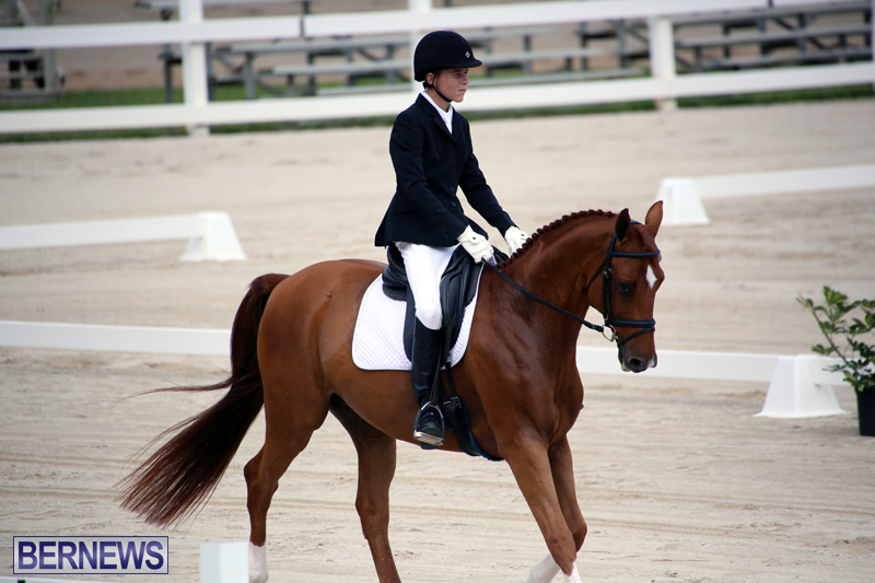 Dressage-Bermuda-Nov-8-2017-10