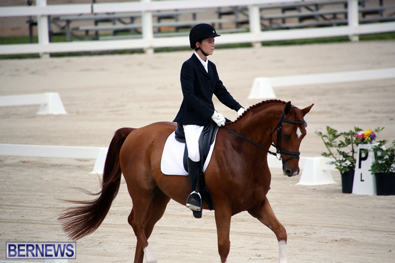 Dressage-Bermuda-Nov-8-2017-11