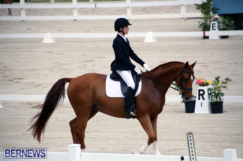 Dressage-Bermuda-Nov-8-2017-12