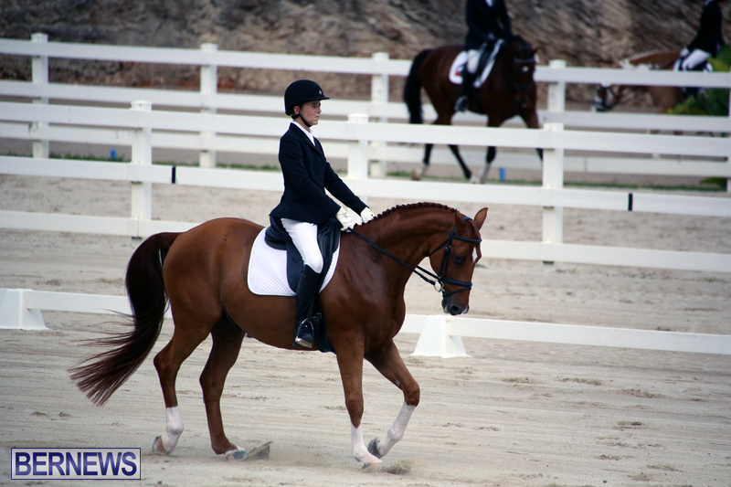 Dressage-Bermuda-Nov-8-2017-13