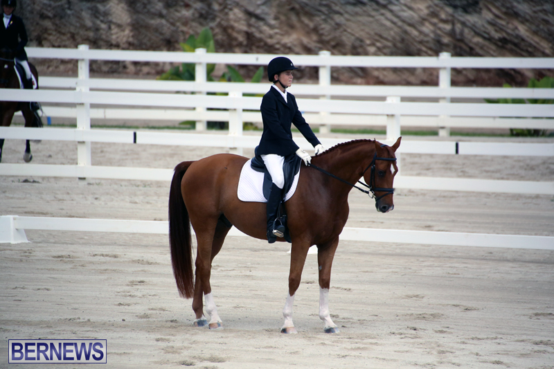 Dressage-Bermuda-Nov-8-2017-14