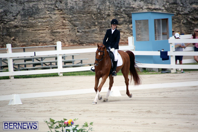 Dressage-Bermuda-Nov-8-2017-15
