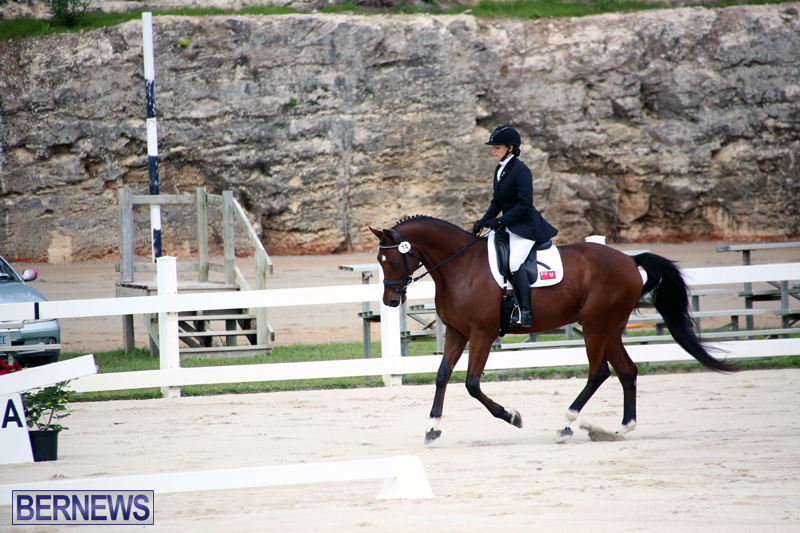 Dressage-Bermuda-Nov-8-2017-16