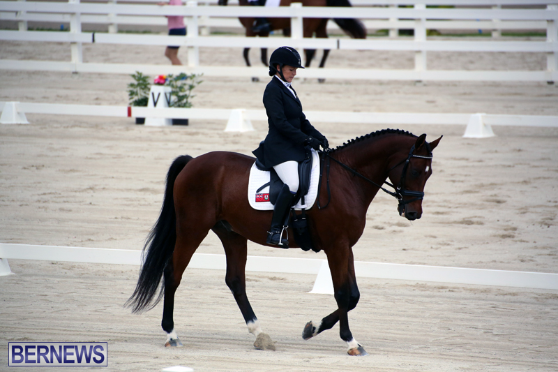 Dressage-Bermuda-Nov-8-2017-17