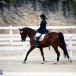 Dressage Bermuda Nov 8 2017 (19)