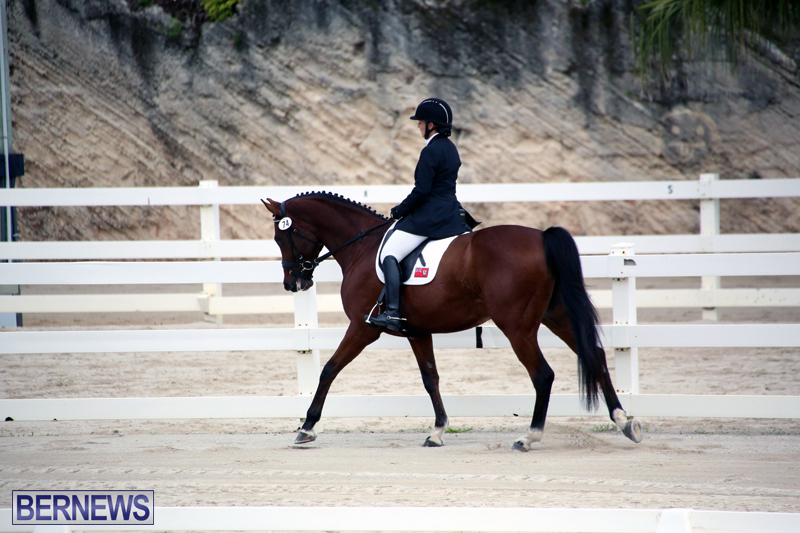 Dressage-Bermuda-Nov-8-2017-19