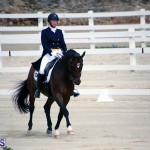 Dressage Bermuda Nov 8 2017 (2)