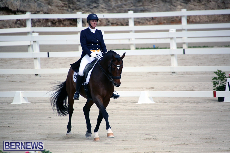 Dressage-Bermuda-Nov-8-2017-2