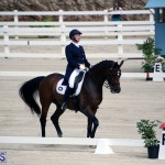 Dressage Bermuda Nov 8 2017 (3)