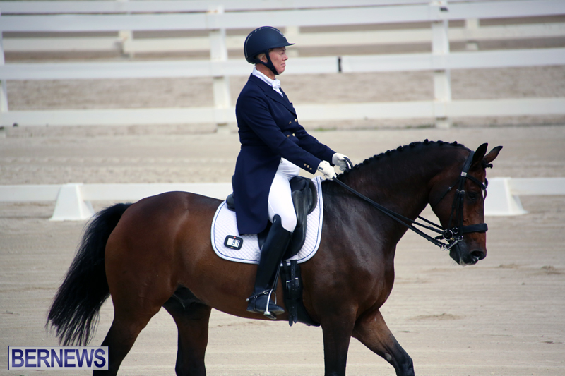 Dressage-Bermuda-Nov-8-2017-4