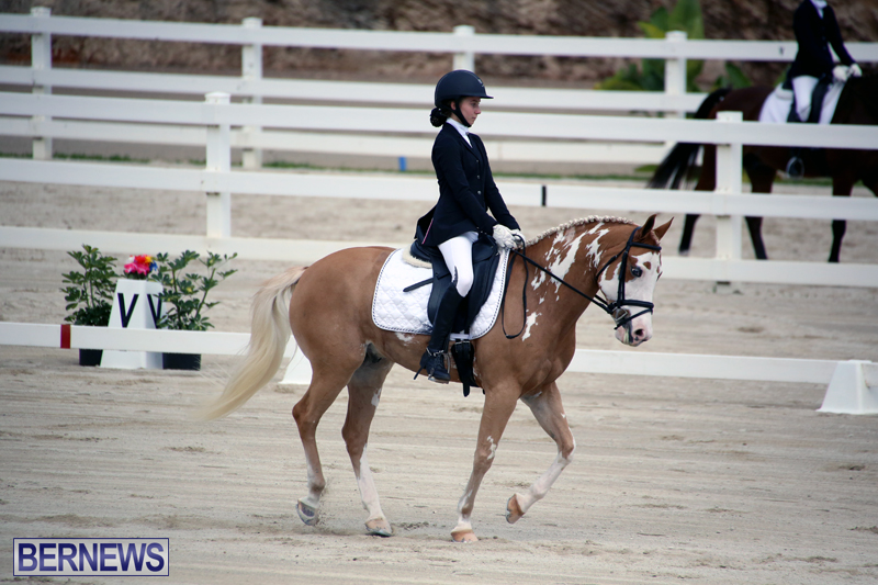 Dressage-Bermuda-Nov-8-2017-5