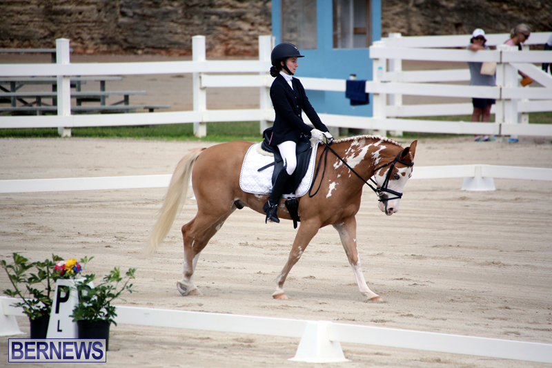 Dressage-Bermuda-Nov-8-2017-7
