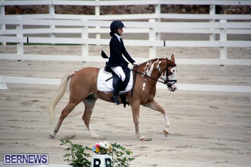 Dressage-Bermuda-Nov-8-2017-8