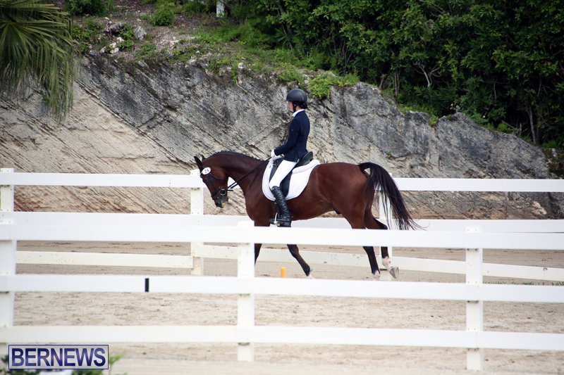 Dressage-Bermuda-Nov-8-2017-9