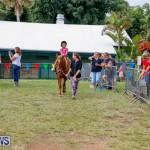Fall Festival Bermuda, November 4 2017_2582