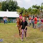 Fall Festival Bermuda, November 4 2017_2587