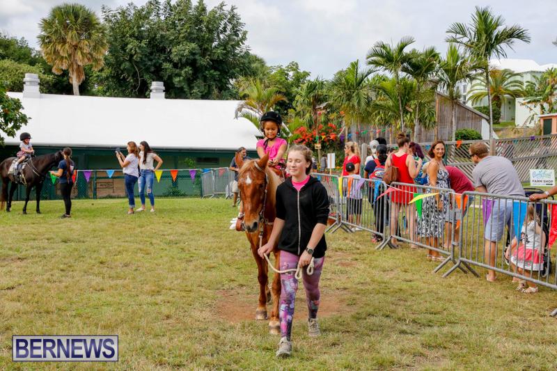 Fall-Festival-Bermuda-November-4-2017_2587