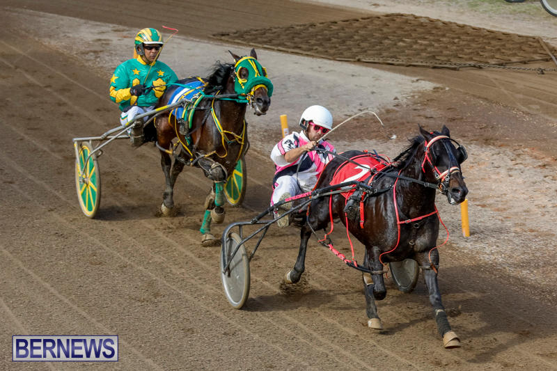 Harness-Pony-Racing-Bermuda-November-13-2017_7451