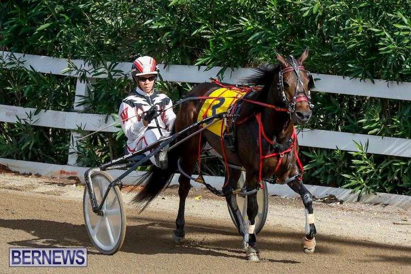 Harness-Pony-Racing-Bermuda-November-13-2017_7491