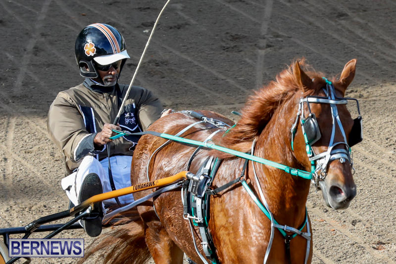 Harness-Pony-Racing-Bermuda-November-13-2017_7510