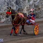 Harness Pony Racing Bermuda, November 13 2017_7535