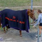 Harness Pony Racing Bermuda, November 13 2017_7577