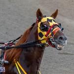 Harness Pony Racing Bermuda, November 13 2017_7595