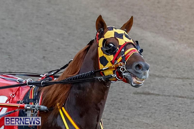 Harness-Pony-Racing-Bermuda-November-13-2017_7595