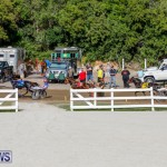 Harness Pony Racing Bermuda, November 13 2017_7650