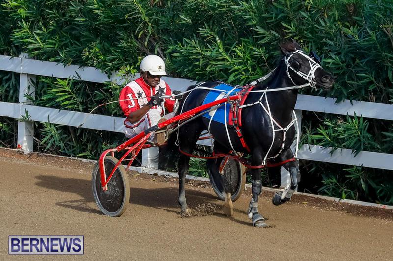 Harness-Pony-Racing-Bermuda-November-13-2017_7697