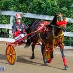 Harness Pony Racing Bermuda, November 13 2017_7708