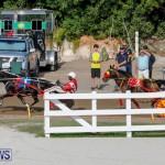 Harness Pony Racing Bermuda, November 13 2017_7746
